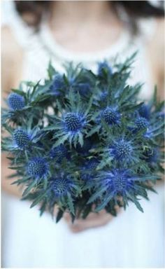 Wedding Bouquet Comprised Entirely Of: Blue Eryngium Thistle Wedding Flower Guide, Blue Wedding Flowers, Flower Bouquet Wedding, Blue Flowers, Floral Wedding, Thistle Bouquet, Sea Holly, Types Of Flowers, Perfect Wedding