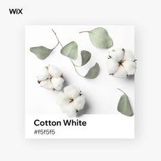 Wix Color Palette Inspiration | Cotton White #f5f5f5