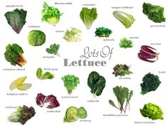 Spring is here and so are rows and rows of beautiful spring greens. Lettuce and spring greens come in all shapes, sizes and flavors. We offer nearly twenty varieties throughout the year and several… Types Of Lettuce, Types Of Salad, Leaf Vegetable, Vegetable Recipes, Vegetable Garden, Vegetable Nutrition, Healthy Nutrition, Purple Kale, Salad Recipes