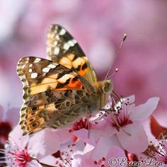 Butterfly photography nature photo pink