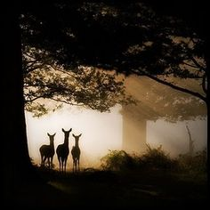 Magical - http://www.facebook.com/contreladeforestation