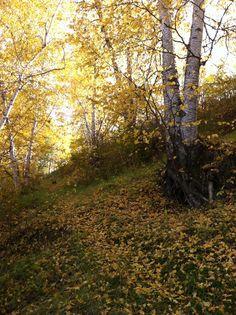 Central Alberta, Fall 2013.