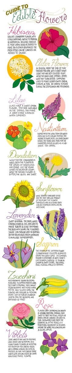 Illustrated guide to edible flowers for the kitchen garden | jardin potager | The Micro Gardener
