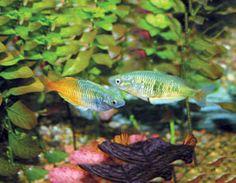 Planted Aquarium Supplies and Care