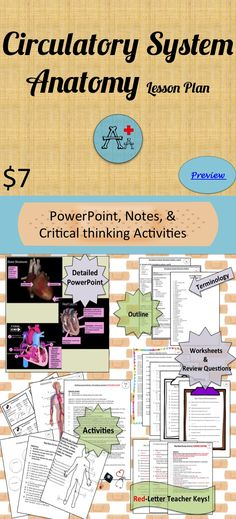 Circulatory System Structure PowerPoint, Mini lesson on Heart ...