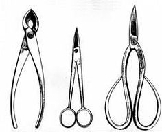 Bonsai Tools You May or May Not Need - This is great advice on Bonsai tools for the beginner. This person has the same name...but is not me...