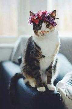 Hippie kitty