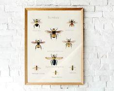 #Vintage #Bumblebee lithograph | Botanical illustration | Printable vintage #Bee art Printable Vintage, Printable Art, Printables, Vintage Bee, Bee Art, Etsy Crafts, Free Prints, Botanical Illustration, Sell On Etsy
