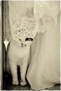 whiskers + lace.