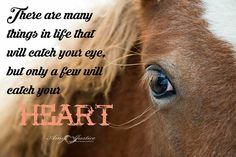 Horses, Eyes, Animals, Life, Animales, Animaux, Animal, Animais, Horse
