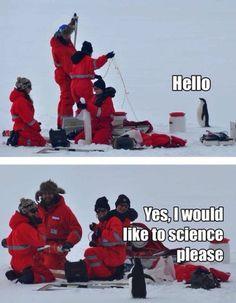 Søteste pingvinen!