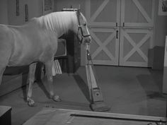 Mister Ed, 70s Tv Shows, Old Shows, Harvester, Crazy Horse, A Funny, Short Stories, My Childhood, Nostalgia
