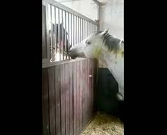 Horse Feeding Another Horse