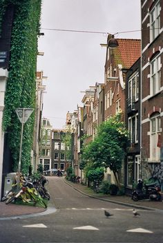 (5) (Amsterdam) Greenery and architecture, Urban and rural. These are the types of streets my utopia will be filled with.