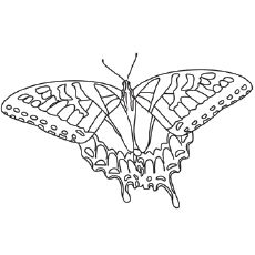 Top 50 Butterfly Coloring Pages For Your Toddler Butterfly