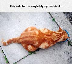 Symmetricat