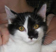 Lisa, Letizia e Leo sono una meraviglia di gattini, 3 mesi, vaccinati, sverminati e spulciati. Lisa bianco/nera con la macchia sul naso