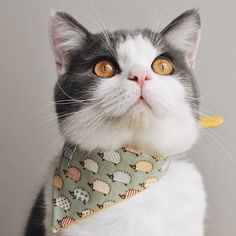 A charmer in his new Spring scarf