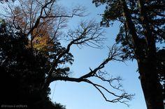 青空に映える紅葉。花山歩道にて。