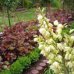 ground cover as lawn border - Google Search