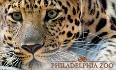 Philadelphia Zoo – FREE Teacher Pass for UNLIMITED Summer Admission (Teachers can sign up for FREE M-F summer admission!!)