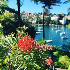 Beautiful lunchtime walk around Cremorne Point... Sydney's putting on a great Autumn Day! #sydney #ausblogger #australia #lunchtime #lunchbreak #kidsactivities #kidscrafts #toddlerlife #toddlerstagram #kidsideas #kidsactivities #kidscrafts #outdoors #exercise #funwithfamily #funwithmum #funwithfriends #exercise #lunch #view #iddlepeeps
