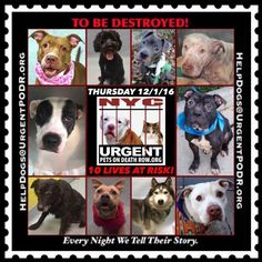 TO BE DESTROYED 12/01/16 - - Info  Please Share:  To rescue a Death Row Dog, Please read this:http://information.urgentpodr.org/adoption-info-and-list-of-rescues/  To view the full album, please click here:http://nycdogs.urgentpodr.org/tbd-dogs-page/ -  Click for info & Current Status: http://nycdogs.urgentpodr.org/to-be-destroyed-4915/