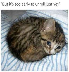 24 silly caturday cat memes to fill your face in - . - 24 Silly Caturday Cat Memes To Fill Your Face In – fill - Funny Animals With Captions, Cute Funny Animals, Cute Baby Animals, Animals And Pets, Cute Dogs, Funny Captions, Animal Captions, Funny Cats, Cute Cats And Kittens