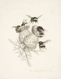 Bees on a Thistle Plant, Christian Schuchardt, German
