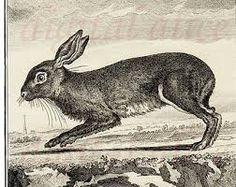 """Résultat de recherche d'images pour """"lapin gravure"""""""