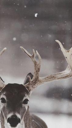 Wildlife Photography Wallpaper Animal Photography - All the Animals Wildlife Photography Tips, Winter Photography, Animal Photography, National Geographic Photography, Street Photography, Nature Animals, Animals And Pets, Cute Animals, Wild Animals