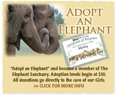 """The Elephant Sanctuary : Hohenwald Tennessee. Can """"adopt"""" an elephant here. These are mainly elephants who are retired from zoos and circuses."""