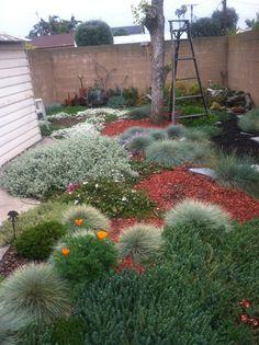 "drought resistant plants in a tiny backyard.  Like the ""all-low"" idea for my frontyard.  Sedums, diascia, blue fescue, poppy, creeping verbenas."