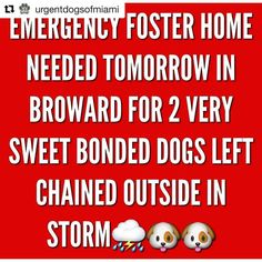 **UPDATE! Foster found!! ❤️*** BROWARD FLORIDA!! any help? $$ &/or foster?? 2 bonded dogs see @urgentdogsofmiami !  Repost @urgentdogsofmiami ・・・ PLEASE HELP🙏🏻We are in DESPERATE need of an emergency foster Home tomorrow for two extremely sweet BONDED angels who were rescued from being tied up with zero shelter, food or water during this dangerous hurricane. Their owners boarded up their Home and intentionally left them chained up outside to suffer. They are the SWEETEST babies ever. They…