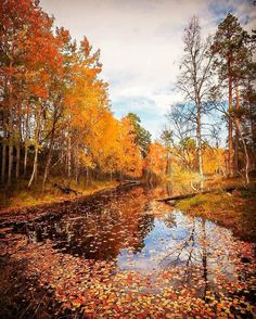 Colorful Autumn 🍁 Have you been here in Autumn! Picture by Arctic, Finland, Autumn, Instagram, Pictures, Painting, Colorful, Photos, Fall Season