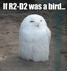 If R2-D2 was a bird…
