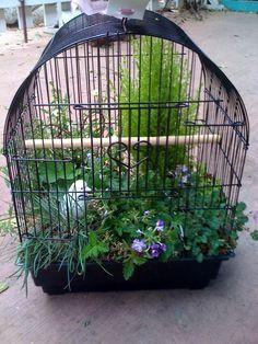 birdcage garden - from  my favorite gardening store in San Juan Capistrano