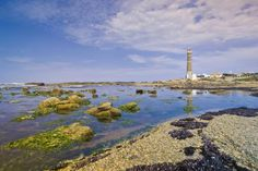 Algea-covered rocks emerge from the surface of glassy blue-green water, and a distant lighthouse juts out over the sea in Cabo Polonio, Uruguay
