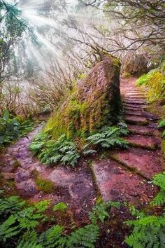 FOREST PATH, MADEIRA, PORTUGAL | A 1 Nice Blog