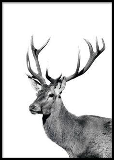 Poster med hjort, fin till skandinavisk inredning. Stilren nordisk inredning.