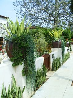 Love the planting in and around these pots. Pinned to Garden Design - Pots & Planters by Darin Bradbury.