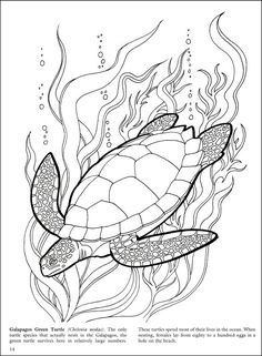 Galapagos coloring pages turtle Animal Coloring Pages, Fish Drawings, Drawings, Sea Turtle Drawing, Turtle Coloring Pages, Turtle Tattoo, Coral Reef Drawing, Dark Art Drawings, Color