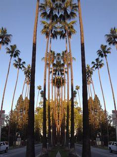 palm parade - lia.eliades