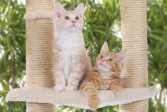 Find out exactly why cats need scratching posts and how you can keep kitty from destroying your furniture. What are the best kinds? Scratching Post, Cat Lover, Happy, Animals, Alter, Products, Cat Cat, Cat Behavior, Crabs