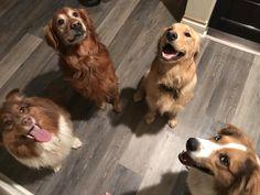The gangs all here   http://ift.tt/2tEga8Y via /r/dogpictures http://ift.tt/2tHjrV0  #lovabledogsaroundtheworld