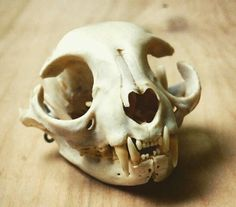 Cat Skull, pet preservation