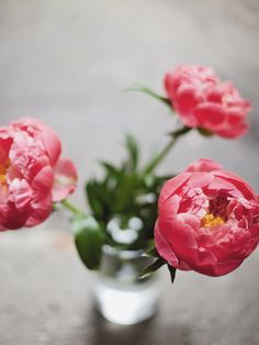 first peonies of the season