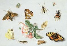 Butterflies Moths And Other Insects With A Sprig Of Apple Blossom Painting by Jan Van Kessel