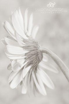 Fine Art Friday~Sharon Gartrell Texas Fine Art Photography - Sharon Gartrell Photography
