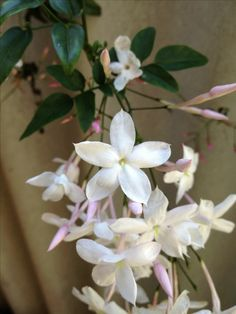 Jasmine....I could die in this scent.